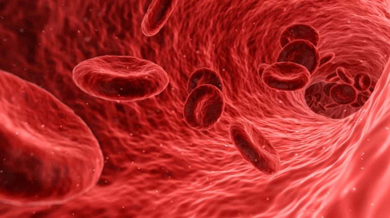 circolo sanguigno