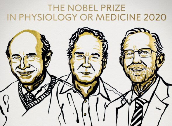 un disegno dei 3 premi nobel per la medicina 2020
